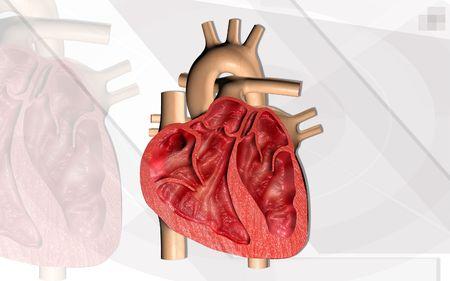 atrium: Digital illustration of  heart  in  colour  background