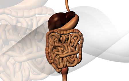 Digital illustration of human digestive system in colour background Stock Illustration - 5758323