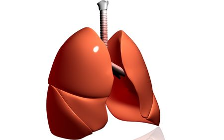 pulmones: Digital illustration of human lungs in isolated background