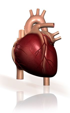 ventricle: Digital illustration of  heart  in isolated background  Stock Photo