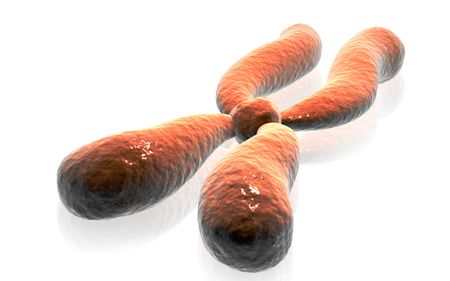 Digital illustration  of chromosome in   isolated background    illustration