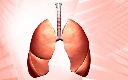 gullet: Ilustraci�n digital de pulmones humanos aislados de fondo  Foto de archivo