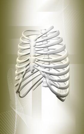 Digital illustration  of collar bone in    isolated background    illustration