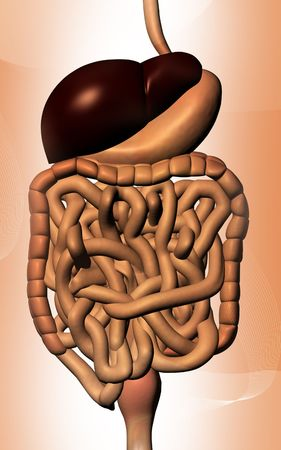 digestive disease: Digital illustration of human digestive system in colour background
