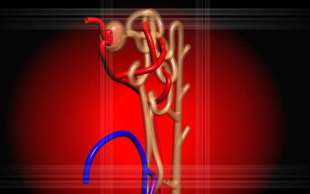 electrolytes: Digital illustration of  nephron   in  isolated  background