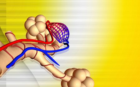 alveoli: Digital illustration of  alveoli  in colour background  Stock Photo