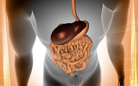 Digital illustration of human body with  digestive system in colour background Stock Illustration - 5927724