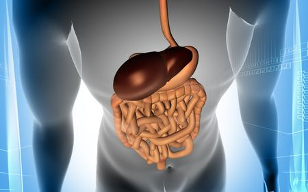 Digital illustration of human body with  digestive system in colour background  illustration