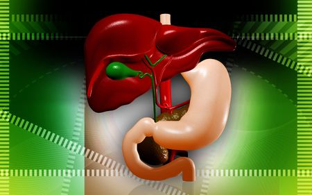 Digital illustration of  liver  in isolated  background Stock Illustration - 5927705