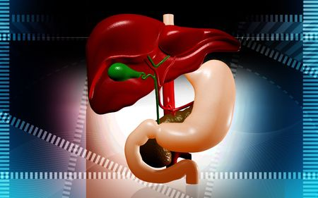 Digital illustration of  liver  in isolated  background   illustration