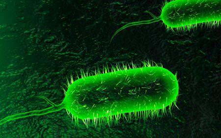 colera: Ilustraci�n digital de bacterias de c�lera en el color de fondo