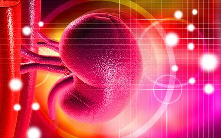 Digital illustration of kidney in colour background   Banco de Imagens