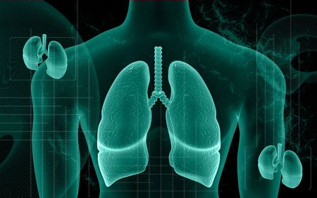 gullet: Digital illustration of human body and lungs in colour background