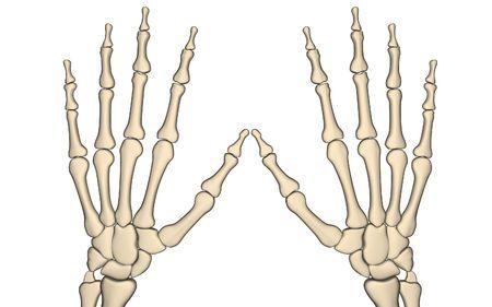 Digital illustration of hand bone in isolated background   illustration