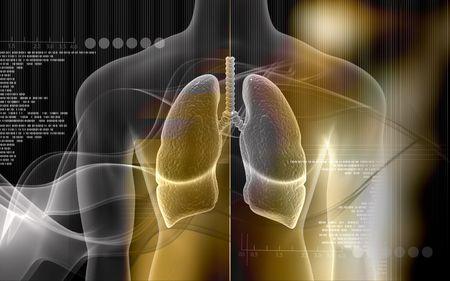 aparato respiratorio: Ilustraci�n digital del cuerpo humano y los pulmones en el color de fondo