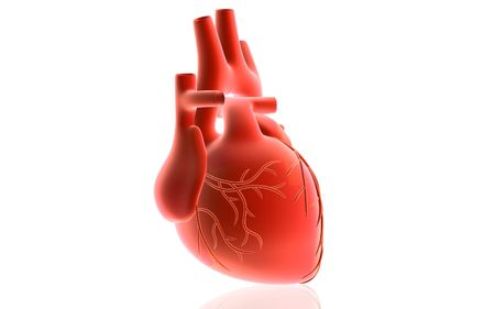 ventricle: Digital illustration of  heart  in isolated  background
