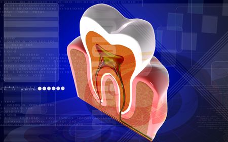 Digital illustration of teeth cross section  in colour background Stock Illustration - 6819048