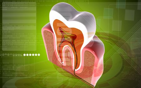 Digital illustration of teeth cross section  in colour background    illustration