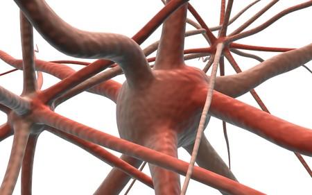 Digital illustration of Neuron in isolated background  illustration