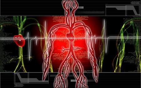 Digital illustration of vascular system in colour background  Stock Illustration - 6892567