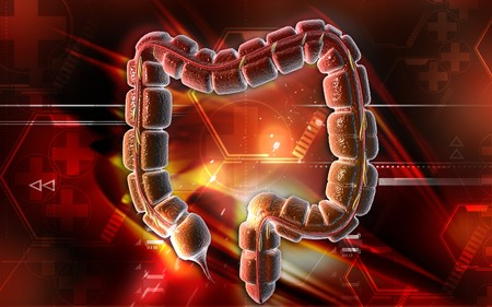 Digital illustration of large intestine in colour background  Stock Illustration - 6892554