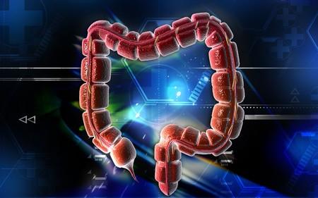 Digital illustration of large intestine in colour background Stock Illustration - 6892549