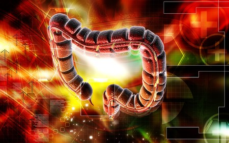 Digital illustration of large intestine in colour background  Stock Illustration - 6917671