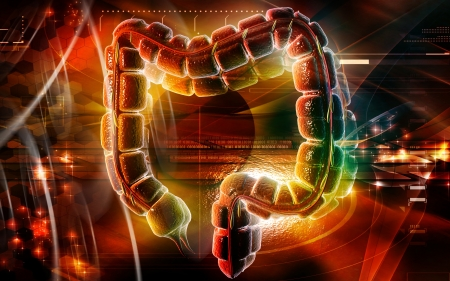 Digital illustration of large intestine in colour background  Stock Illustration - 20409714