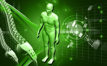 Digital illustration of  human body and back bone in colour  background  illustration