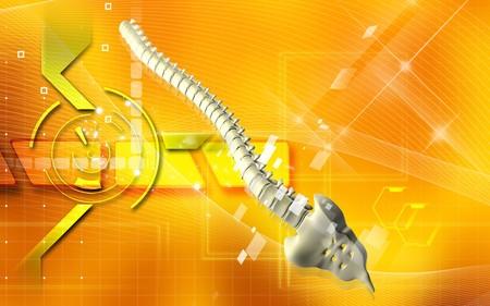 Digital illustration  of back bone in    colour background   Stock Illustration - 7104661