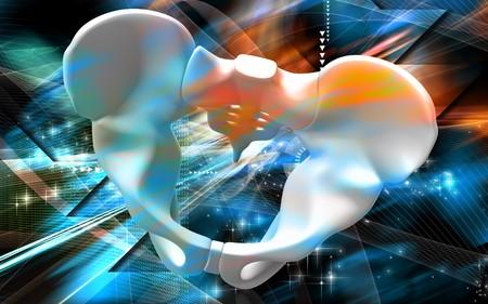 Digital illustration  of pelvic girdle in    colour background    illustration