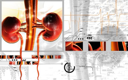 renal: Digital illustration of kidney in colour background   Stock Photo