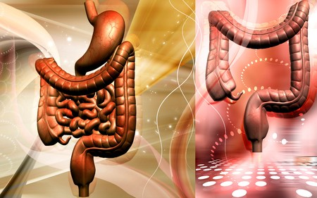 Digital illustration of human digestive system in colour background  Stock Illustration - 7429597