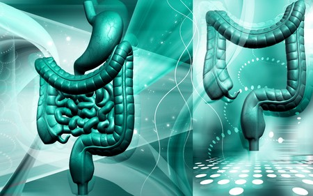 Digital illustration of human digestive system in colour background  Stock Illustration - 7429595