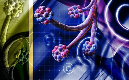 Digital illustration of  alveoli  in  colour  background illustration