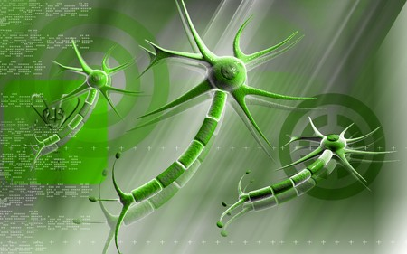 Digital illustration of  neuron  in colour  background Stock Illustration - 7677045