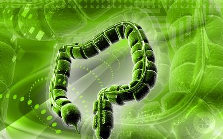 Digital illustration of large intestine in colour background Stock Illustration - 7677115