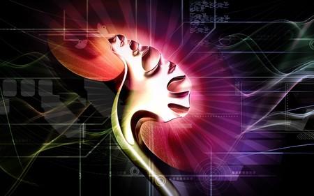 nephron: Digital illustration of  kidney in colour  background   Stock Photo