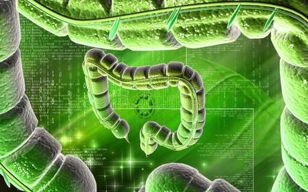 Digital illustration of large intestine in colour background  Stock Illustration - 7988195