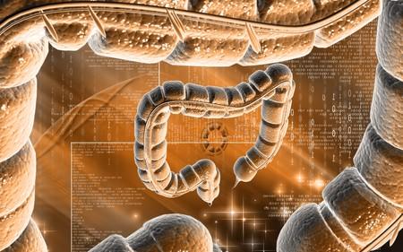 Digital illustration of large intestine in colour background Stock Illustration - 7988196