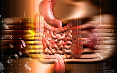 Digital illustration of human digestive system in colour background Stock Illustration - 7988167