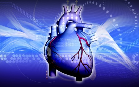 human vein: Digital illustration of  heart  in  colour  background