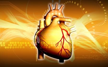 veine humaine: Illustration num�rique du coeur en fond de couleur  Banque d'images