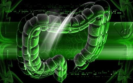 Digital illustration of large intestine in colour background Stock Illustration - 8120866
