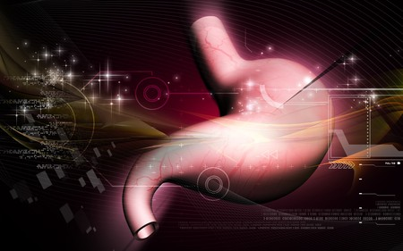 Digital illustration of  stomach  in colour  background   illustration