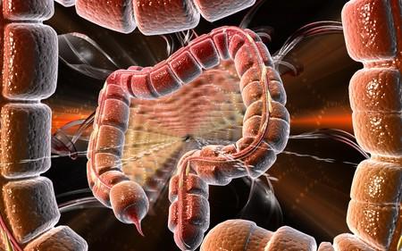 Digital illustration of large intestine in colour background  Stock Illustration - 8179410