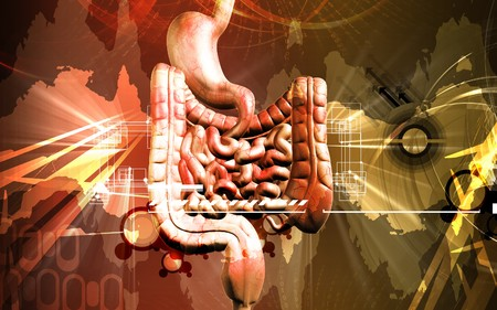 Digital illustration of human digestive system in colour background Stock Illustration - 8197294