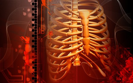 Digital illustration of  rib cage  in colour  background Stock Illustration - 8197290