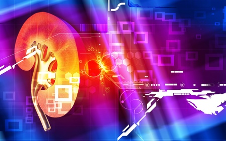Digital illustration of  kidney in colour  background Stock Illustration - 8264378
