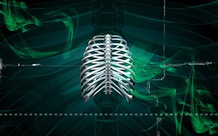 Digital illustration of  rib cage  in colour  background Stock Illustration - 8264313